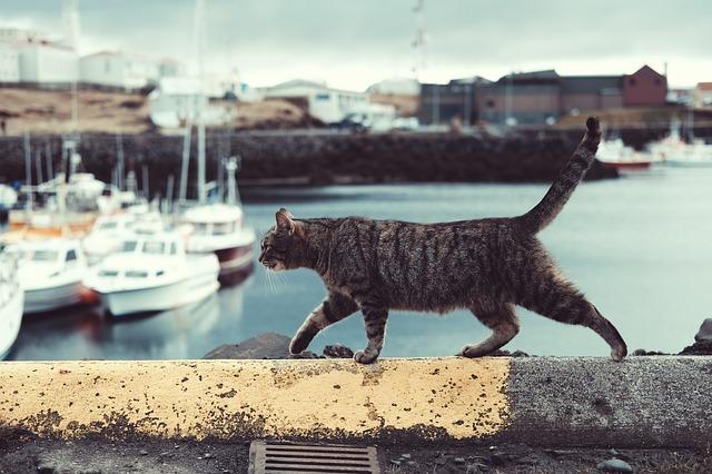 cat beach photo