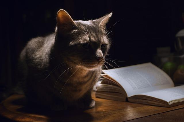 book cat photo